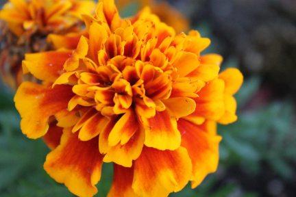 beautiful-bloom-blooming-1031628.jpg