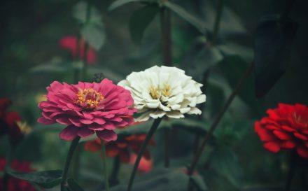 beautiful-bloom-blooming-787552