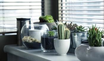 pots-plants-cactus-succulent (1)